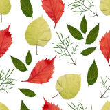 Seamless pattern with autumn leaves.  EPS,JPG. Autumn vector. Seamless pattern with autumn leaves. Red, green and yellow leaves on a white background. Vector Royalty Free Stock Photo