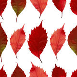 Seamless pattern with autumn leaves. EPS,JPG. Autumn vector. Seamless pattern with autumn leaves. Red leaves on a white background. Vector seamless pattern Stock Image