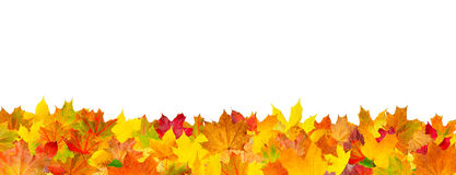 Seamless pattern of autumn leaves horizontal background Stock Image