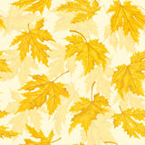 Seamless pattern with autumn leaves. Maple leaf. Stock Images