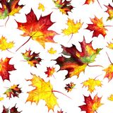 Seamless pattern with autumn leaves. Painted by hand in watercolor vector illustration
