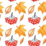 Seamless pattern with autumn leaves and rowan drawing by watercolor, hand drawn elements