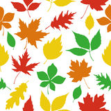 Seamless pattern autumn leaves silhouettes. Isolated on white background Royalty Free Stock Images