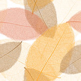 Seamless pattern from autumn leaves with thread Stock Images