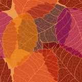 Seamless pattern of autumn leaves Royalty Free Stock Photos