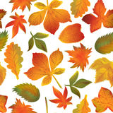 Seamless pattern of autumn leaves Vector Royalty Free Stock Image