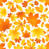 Seamless pattern of autumn leaves Stock Image