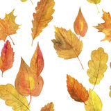 Seamless pattern with autumn leaves in watercolor Stock Photography