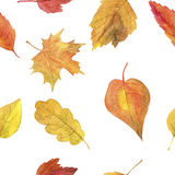 Seamless pattern with autumn leaves in watercolor Stock Photos