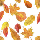 Seamless pattern with autumn leaves in watercolor Royalty Free Stock Photo