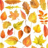 Seamless pattern with autumn leaves in watercolor Royalty Free Stock Images