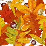 Seamless pattern from autumn leaves Royalty Free Stock Image