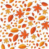 Seamless pattern with autumn leaves on white background Stock Photos
