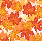 Seamless pattern with autumn maple leaves. Royalty Free Stock Image
