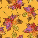 Seamless pattern of autumn maple leaves Stock Images