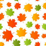 Seamless pattern with autumn maple leaves Royalty Free Stock Image