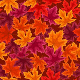 Seamless pattern with autumn maple leaves. Royalty Free Stock Images