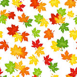 Seamless pattern with autumn maple leaves. Seamless pattern with autumn maple leaves of various colors on a white background Royalty Free Illustration