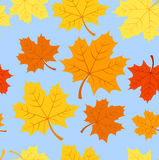 Seamless pattern with autumn maple leaves. Vector. Seamless pattern with autumn maple leaves of various colors on blue background Stock Illustration