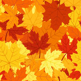 Seamless pattern with autumn maple leaves. Vector Stock Images