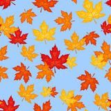 Seamless pattern with autumn maple leaves. Vector. Seamless pattern with autumn maple leaves of various colors on a blue background Vector Illustration