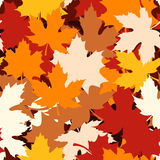 Seamless pattern with autumn maple leaves. Vector Royalty Free Stock Image