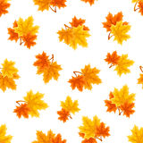 Seamless pattern with autumn maple leaves. Vector illustration. Vector seamless pattern with red, orange and yellow autumn maple leaves on a white background Vector Illustration