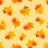 Seamless pattern with autumn maple leaves. Vector illustration. Royalty Free Stock Images