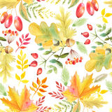 Seamless pattern with autumn plants Royalty Free Stock Photos