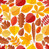 Seamless pattern with autumn tree leaves Stock Image