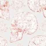 Seamless pattern, background with human skull in rose gold colors. Stock Images
