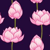 Seamless pattern, background with lotus flower. Botanical illustration style. Stock vector illustration.r vector illustration