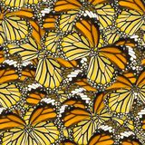 Seamless pattern background of macro butterfly wing Royalty Free Stock Photo