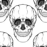 Seamless pattern, background with skull . Outline drawing.   Stock Photo