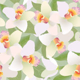 Seamless pattern background with white flowers, or Stock Images
