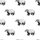 Seamless pattern with badger. Background in vintage style. Stock Photo
