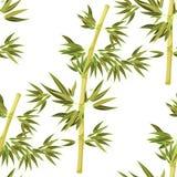 Seamless pattern Bamboo tree tropical china japan. Vector illustration stock illustration