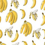 Seamless pattern with banana fruits on  white background.  Hand drawn sketch vector illustration