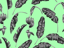 Seamless pattern with banana leaves. Decorative image of tropical foliage, flowers and fruits. Background made without Stock Photos
