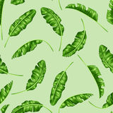Seamless pattern with banana leaves. Image of decorative tropical foliage Royalty Free Stock Images