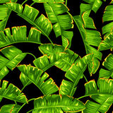 Seamless pattern with banana palm leaves. Decorative tropical foliage.  Royalty Free Stock Photos