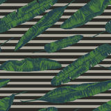 Seamless pattern with banana palm leaves. Hand drawn vector. Seamless pattern with banana palm leaves on stripes. Hand drawn vector Royalty Free Stock Photos