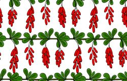 Seamless pattern barberry. Endless ornament twig of berberis. Background brunch with leaves and cluster of red berry. Vector Stock Images