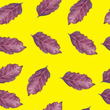 Seamless pattern with basil leaf Royalty Free Stock Image