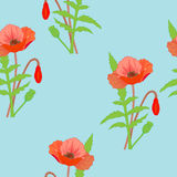 Seamless pattern with beautiful bright summer poppies. Stock Image