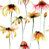 Seamless pattern with beautiful Daisy flowers Stock Image