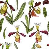 Seamless pattern with beautiful exotic orchid. Stock Photos