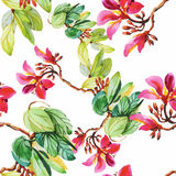Seamless pattern with Beautiful flowers, Watercolor painting Royalty Free Stock Photos