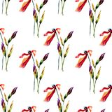 Seamless pattern with beautiful Iris and Poppy flowers. Watercolor illustration Royalty Free Stock Image