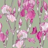 Seamless pattern with Beautiful pink iris flowers Stock Photography